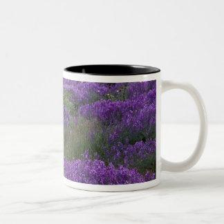 Europe, Turkey, Cappadocia. Rural landscape 2 Two-Tone Coffee Mug