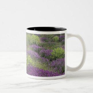 Europe, Turkey, Cappadocia. Rural landscape 3 Two-Tone Coffee Mug