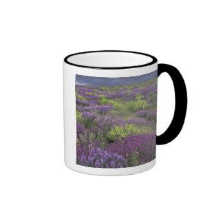 Europe, Turkey, Cappadocia. Rural landscape 3 Ringer Coffee Mug