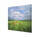 Europe, Tuscany, Poggiolo. Red poppies sway Canvas Print
