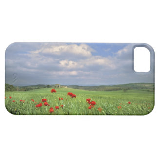 Europe, Tuscany, Poggiolo. Red poppies sway iPhone SE/5/5s Case