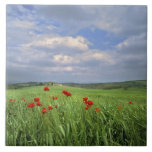 Europe, Tuscany, Poggiolo. Red poppies sway Large Square Tile