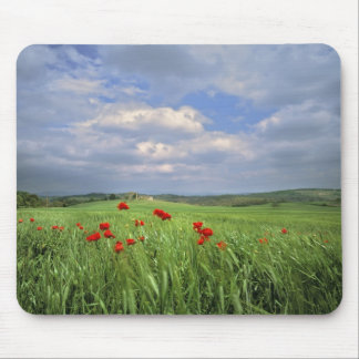 Europe, Tuscany, Poggiolo. Red poppies sway Mouse Pad