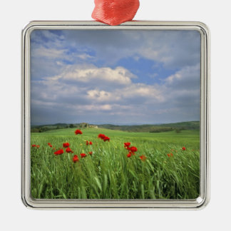 Europe, Tuscany, Poggiolo. Red poppies sway Christmas Ornament