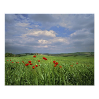 Europe, Tuscany, Poggiolo. Red poppies sway Print