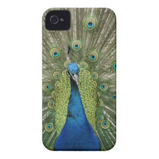 Europe, Wales, Cardiff. Cardiff Castle, peacock iPhone 4 Case-Mate Case