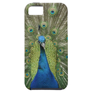 Europe, Wales, Cardiff. Cardiff Castle, peacock iPhone SE/5/5s Case