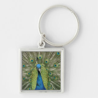 Europe, Wales, Cardiff. Cardiff Castle, peacock Keychain