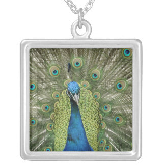 Europe, Wales, Cardiff. Cardiff Castle, peacock Silver Plated Necklace