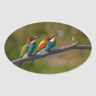 European Bee Eater Birds in Ariège France Stickers