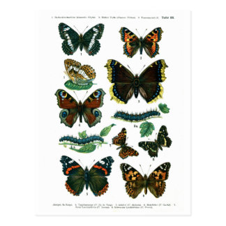 European Butterflies Plate III Postcard