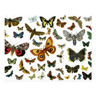 European Butterfly Collage Postcards