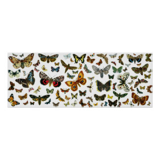 European Butterfly Collage Poster