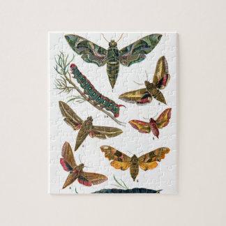 European Butterfly Jigsaw Puzzle
