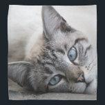 """European cat portrait bandana<br><div class=""""desc"""">Grey european cat portrait while lying on the ground</div>"""