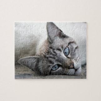 European cat portrait puzzle
