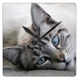 European cat portrait square wall clock