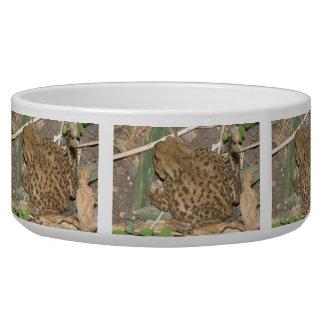 European Common Toad Bowl Dog Bowl