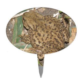 European Common Toad Cake Pick