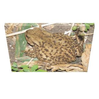European Common Toad Canvas Print