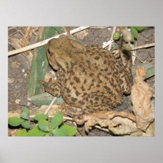 European Common Toad Print