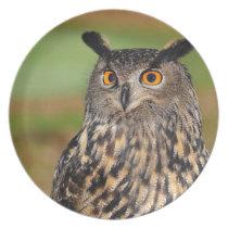 European Eagle Owl Dinner Plate