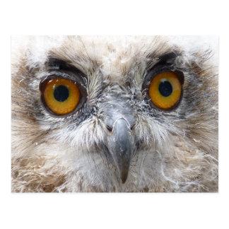 European Eagle owl Postcard