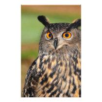 European Eagle Owl Stationery