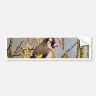 European Goldfinch  bird peace and love Bumper Sticker