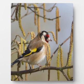 European Goldfinch  bird peace and love Plaque