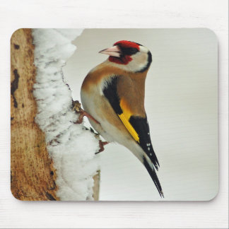 European Goldfinch in snow mousepad