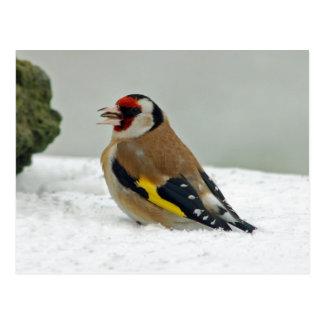 European Goldfinch in snow postcard