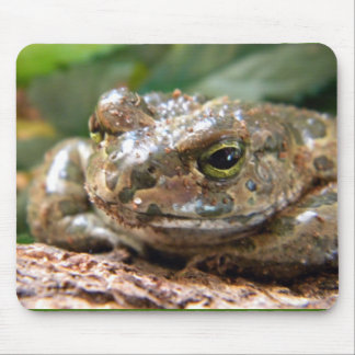 European Green Toad Mouse Pad