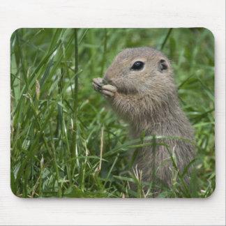 European ground squirrel mouse pad