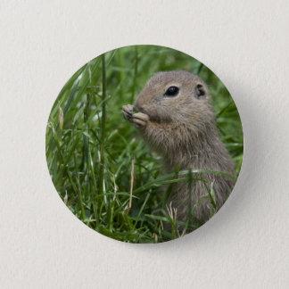 European ground squirrel pinback button