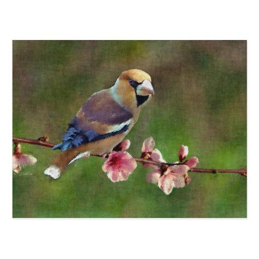 European hawfinch digital painting postcards