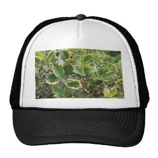 European Holly Mesh Hats