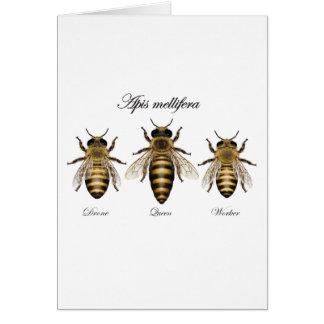 European honey bee (Apis mellifera) Card