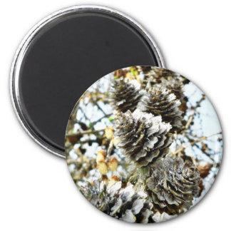 European Larch Cones Magnet