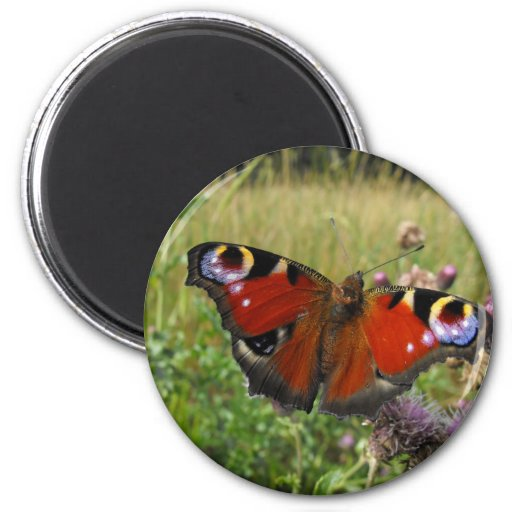 European Peacock Butterfly 2 Inch Round Magnet