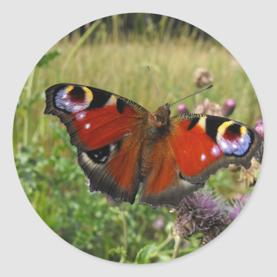 European Peacock Butterfly Classic Round Sticker