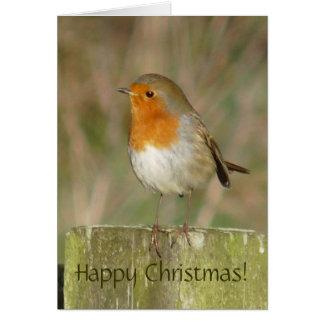 European Robin Christmas Card