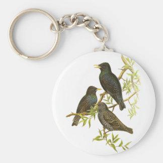 European Starling Basic Round Button Keychain