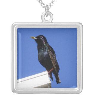 European Starling Bird Necklace