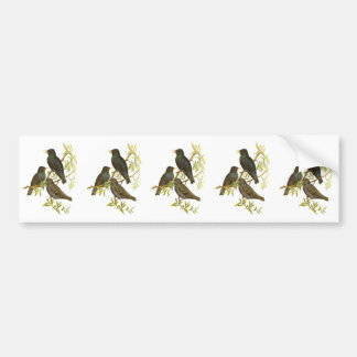 European Starling Bumper Stickers
