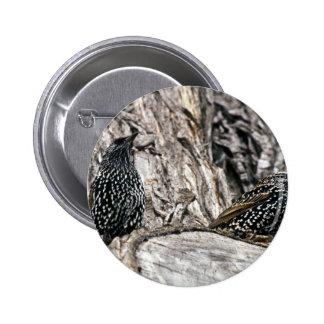 European Starling Pinback Buttons