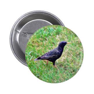 European Starling Button