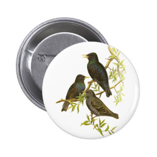 European Starling Pins