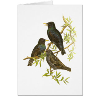 European Starling Greeting Cards