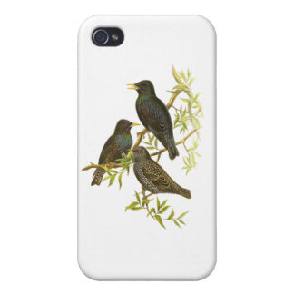 European Starling iPhone 4/4S Cover